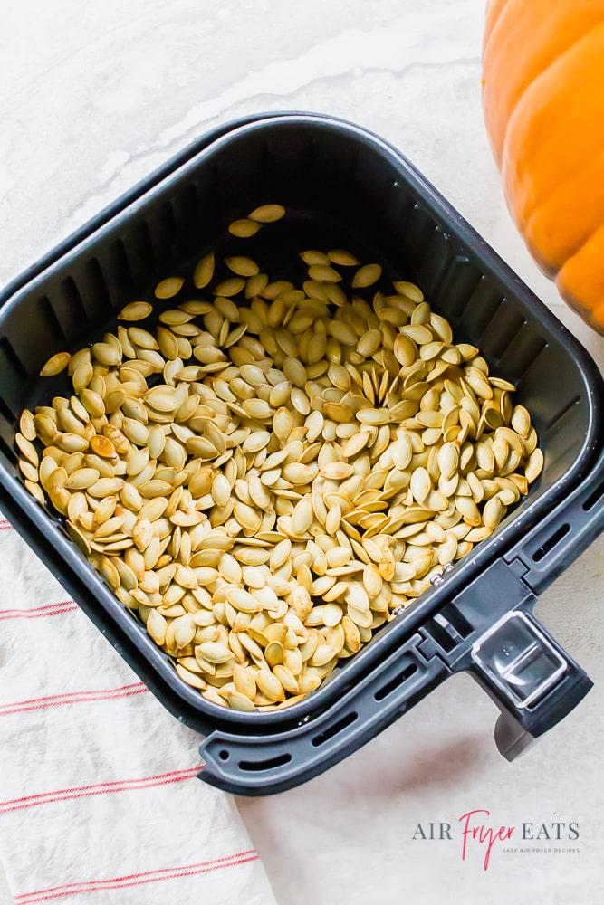 Vertical photo of air fryer pumpkin seeds (cooked) in a black air fryer basket. An orange pumpkin to the top right.
